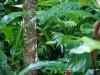 palenque-003